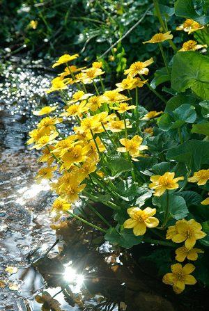Bloemen aan de waterkant