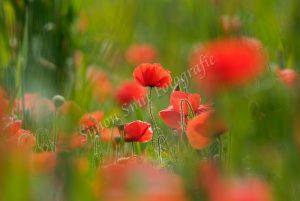 Sfeervolle bloemenpracht