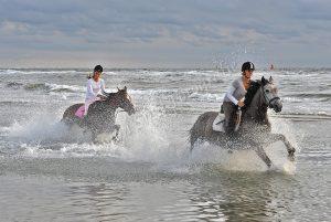 Paarden in galop door het water